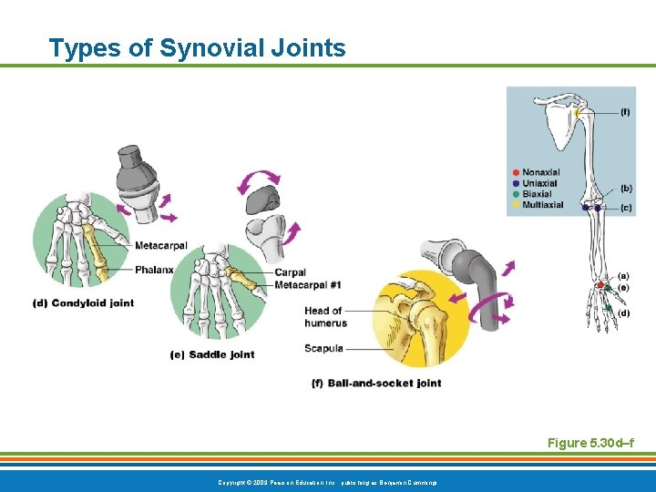 Types of Synovial Joints Figure 5. 30 d–f Copyright © 2009 Pearson Education, Inc.