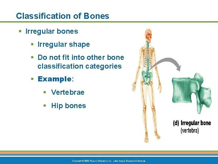 Classification of Bones § Irregular bones § Irregular shape § Do not fit into