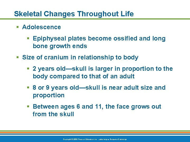 Skeletal Changes Throughout Life § Adolescence § Epiphyseal plates become ossified and long bone
