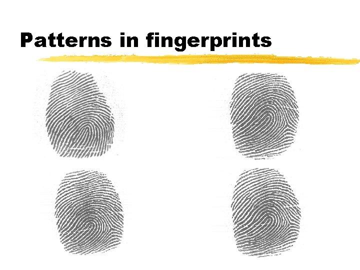 Patterns in fingerprints