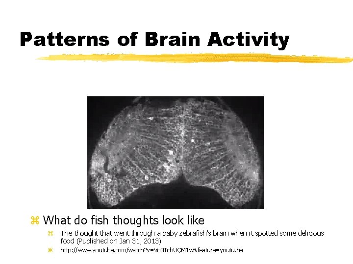 Patterns of Brain Activity z What do fish thoughts look like z The thought