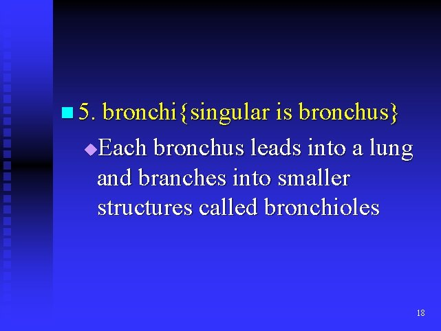 n 5. bronchi{singular is bronchus} Each bronchus leads into a lung and branches into