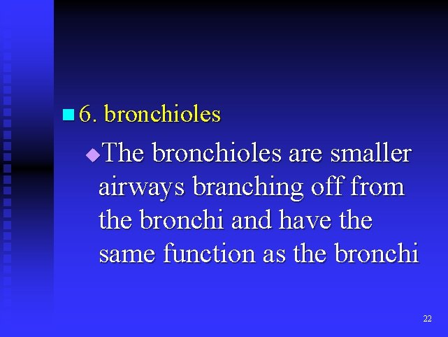 n 6. bronchioles The bronchioles are smaller airways branching off from the bronchi and