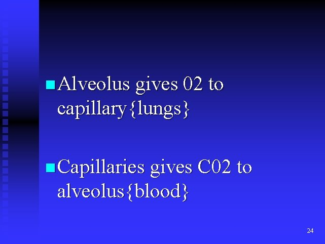 n Alveolus gives 02 to capillary{lungs} n Capillaries gives C 02 to alveolus{blood} 24