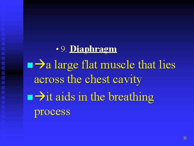 • 9. Diaphragm n a large flat muscle that lies across the chest