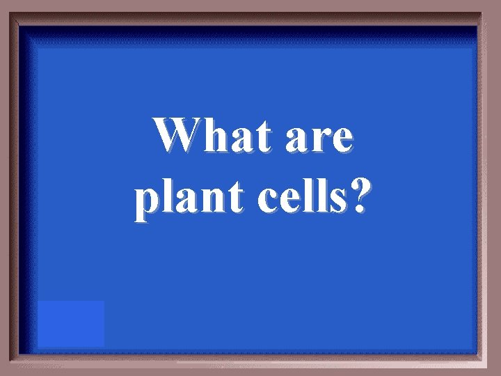 What are plant cells?