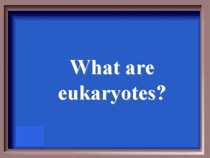 What are eukaryotes?