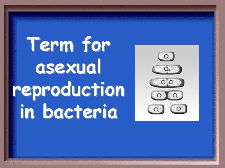 Term for asexual reproduction in bacteria