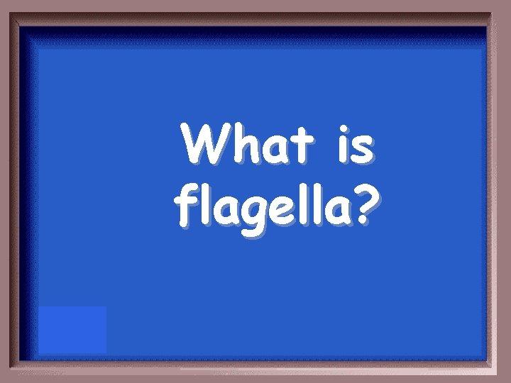 What is flagella?