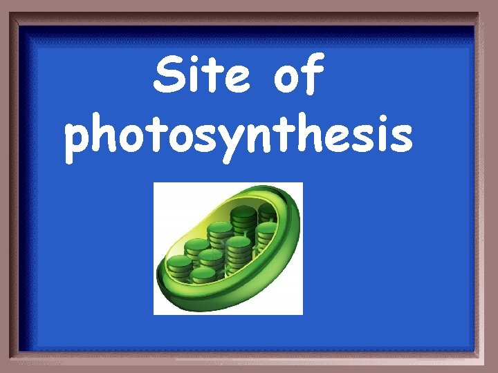 Site of photosynthesis