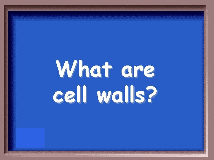 What are cell walls?
