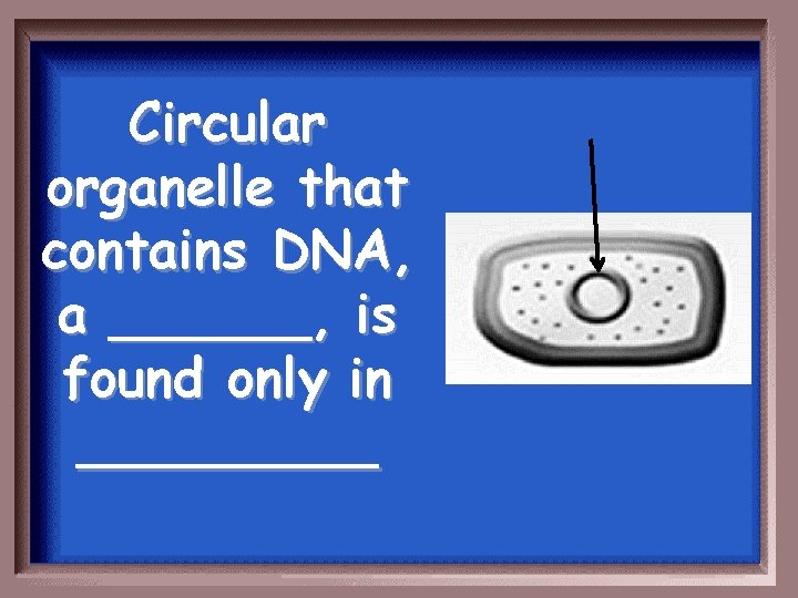 Circular organelle that contains DNA, a ______, is found only in _____