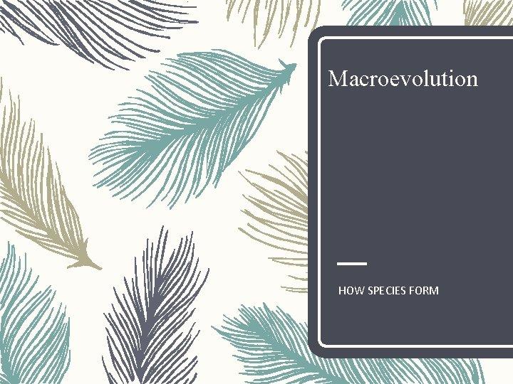 Macroevolution HOW SPECIES FORM