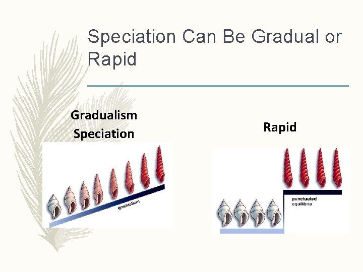 Speciation Can Be Gradual or Rapid Gradualism Speciation Rapid