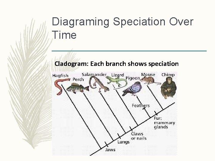 Diagraming Speciation Over Time Cladogram: Each branch shows speciation