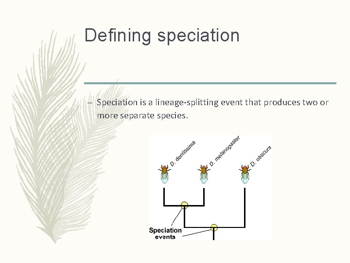 Defining speciation – Speciation is a lineage-splitting event that produces two or more separate