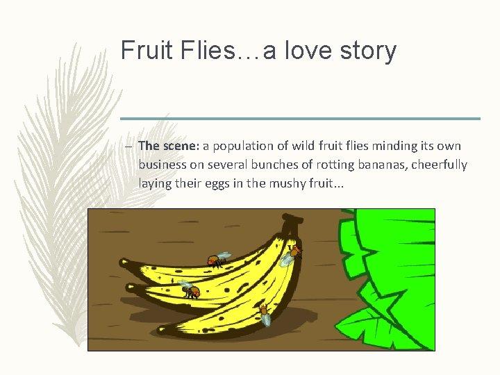 Fruit Flies…a love story – The scene: a population of wild fruit flies minding