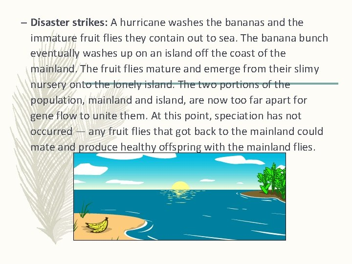 – Disaster strikes: A hurricane washes the bananas and the immature fruit flies they