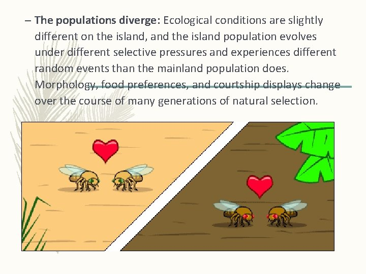 – The populations diverge: Ecological conditions are slightly different on the island, and the