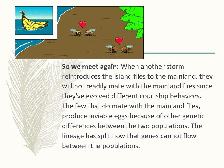 – So we meet again: When another storm reintroduces the island flies to the