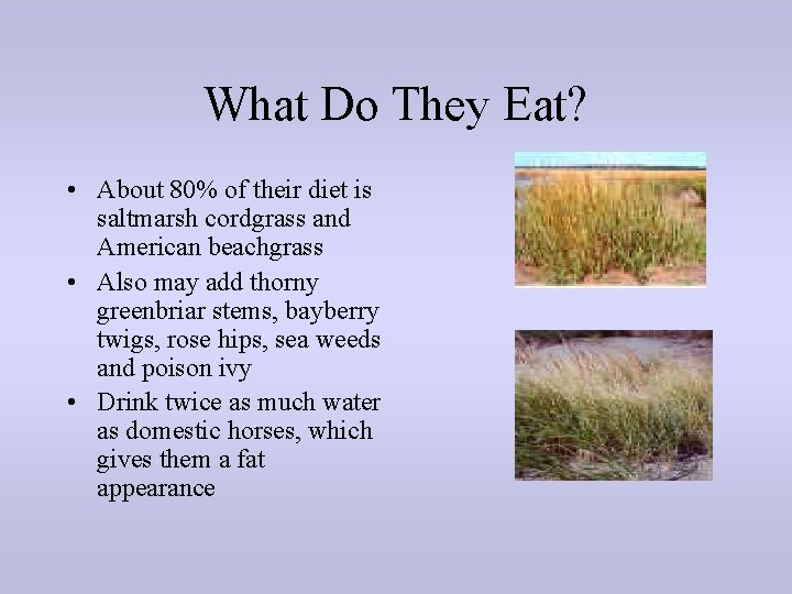 What Do They Eat? • About 80% of their diet is saltmarsh cordgrass and