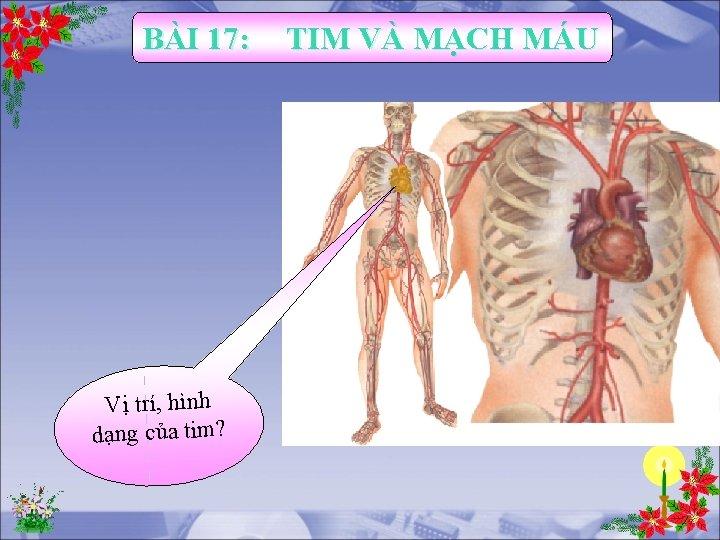 BÀI 17: Vị trí, hình dạng của tim? TIM VÀ MẠCH MÁU