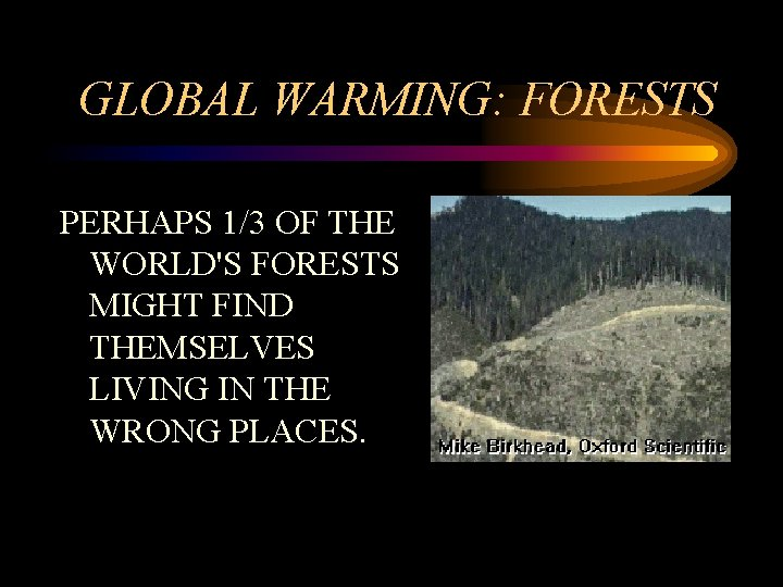 GLOBAL WARMING: FORESTS PERHAPS 1/3 OF THE WORLD'S FORESTS MIGHT FIND THEMSELVES LIVING IN