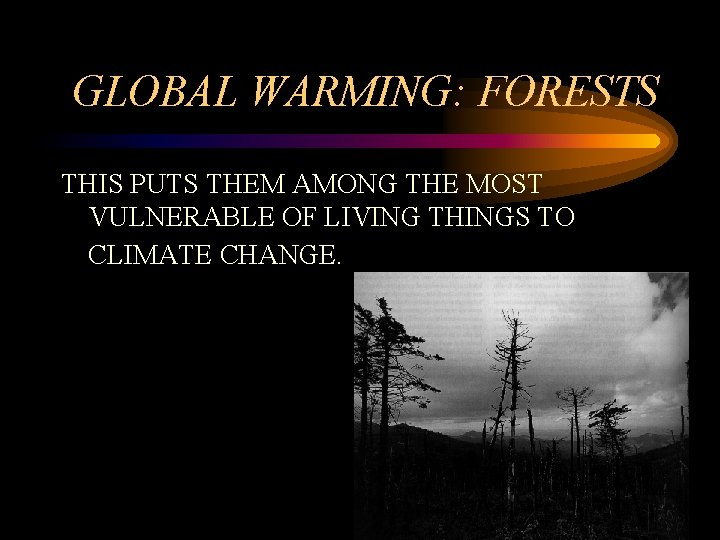 GLOBAL WARMING: FORESTS THIS PUTS THEM AMONG THE MOST VULNERABLE OF LIVING THINGS TO