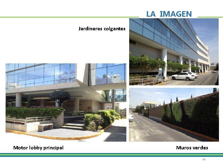 LA IMAGEN Jardineras colgantes Motor lobby principal Muros verdes 10