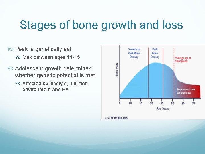 Stages of bone growth and loss Peak is genetically set Max between ages 11