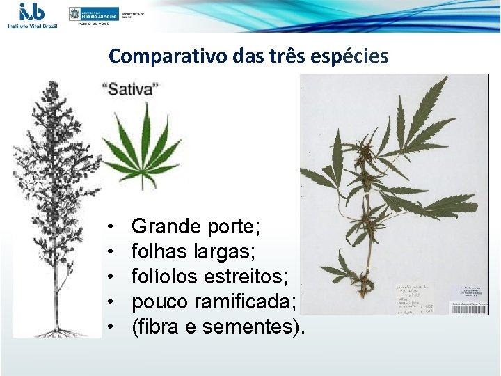 Comparativo das três espécies • • • Grande porte; folhas largas; folíolos estreitos; pouco