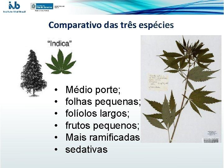 Comparativo das três espécies • • • Médio porte; folhas pequenas; folíolos largos; frutos