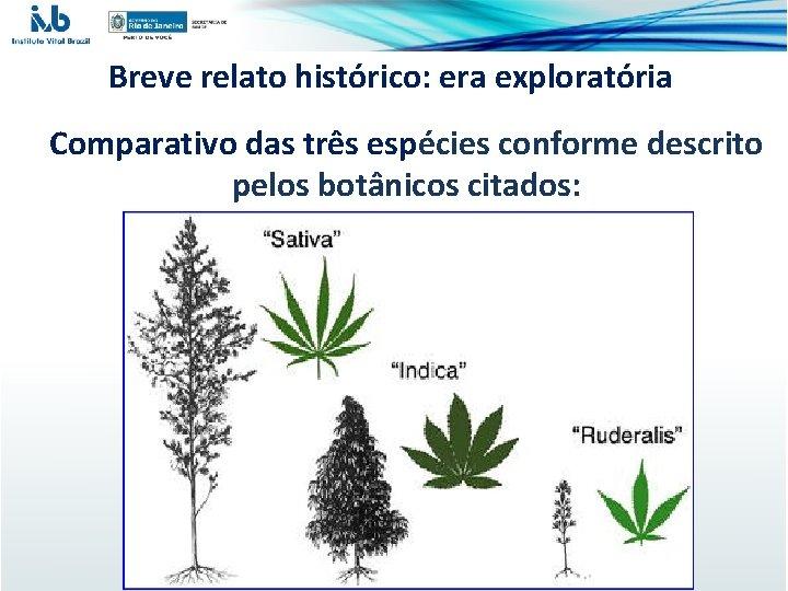 Breve relato histórico: era exploratória Comparativo das três espécies conforme descrito pelos botânicos citados: