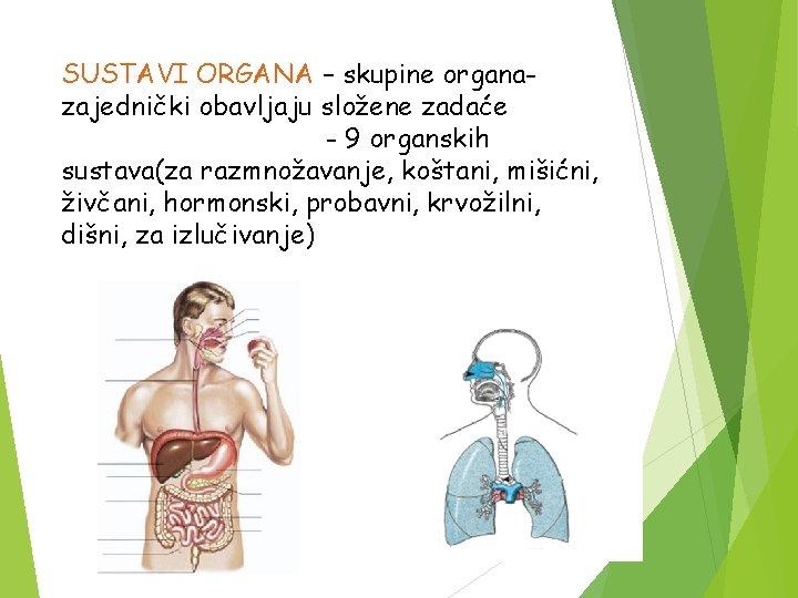 SUSTAVI ORGANA – skupine organazajednički obavljaju složene zadaće - 9 organskih sustava(za razmnožavanje, koštani,