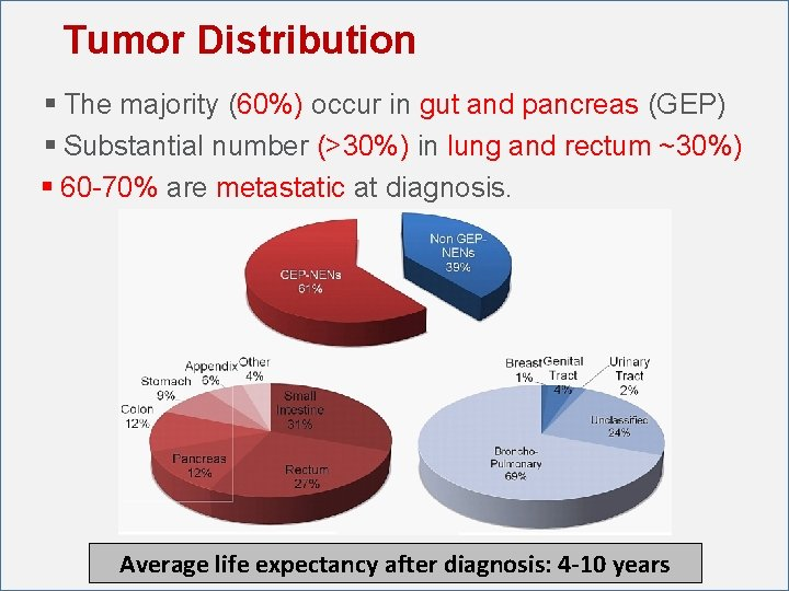 Tumor Distribution § The majority (60%) occur in gut and pancreas (GEP) § Substantial