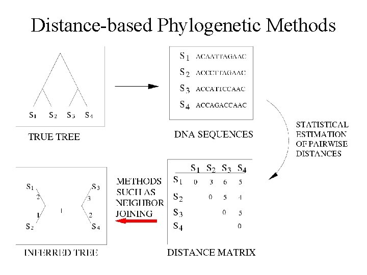 Distance-based Phylogenetic Methods