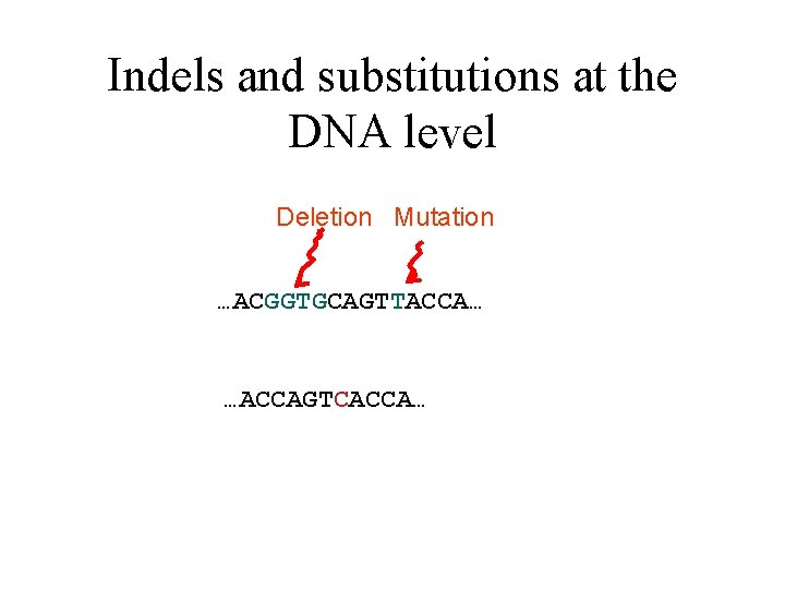 Indels and substitutions at the DNA level Deletion Mutation …ACGGTGCAGTTACCA… …ACCAGTCACCA…