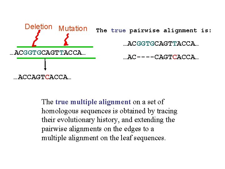 Deletion Mutation The true pairwise alignment is: …ACGGTGCAGTTACCA… …AC----CAGTCACCA… …ACCAGTCACCA… The true multiple alignment
