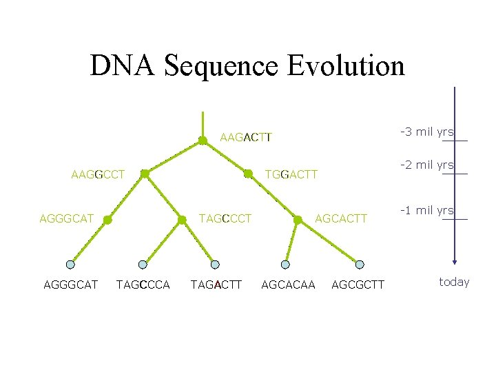 DNA Sequence Evolution -3 mil yrs AAGACTT AAGGCCT AGGGCAT TAGCCCA -2 mil yrs TGGACTT