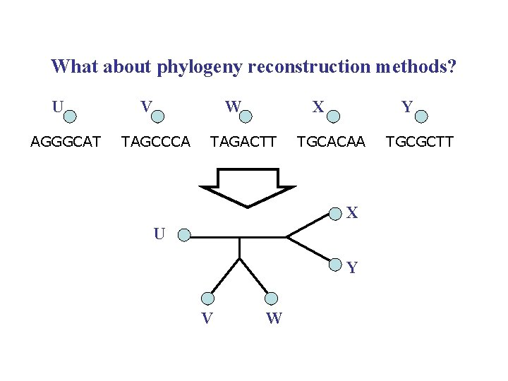 What about phylogeny reconstruction methods? U AGGGCAT V W TAGCCCA X TAGACTT Y TGCACAA