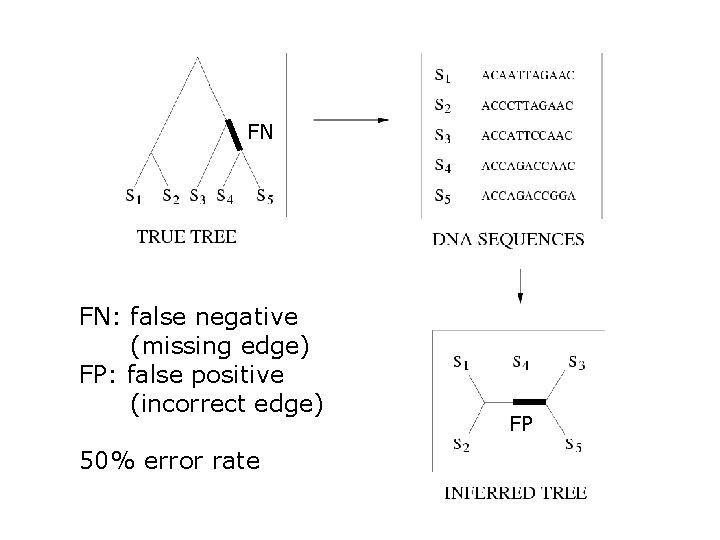 FN FN: false negative (missing edge) FP: false positive (incorrect edge) 50% error rate