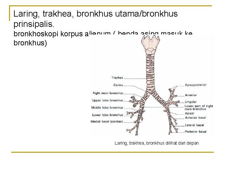 Laring, trakhea, bronkhus utama/bronkhus prinsipalis. bronkhoskopi korpus alienum ( benda asing masuk ke bronkhus)