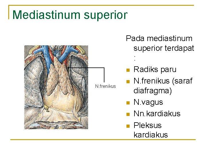 Mediastinum superior N. frenikus Pada mediastinum superior terdapat : n Radiks paru n N.