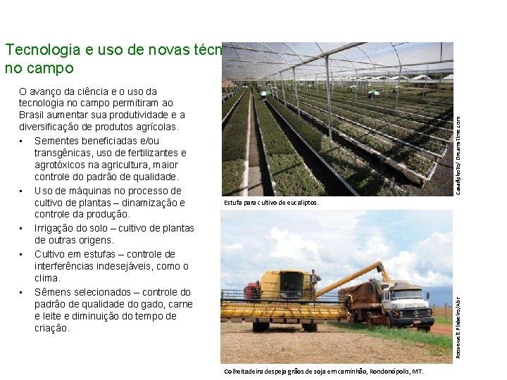 Estufa para cultivo de eucaliptos. Roosewelt Pinheiro/Abr O avanço da ciência e o uso