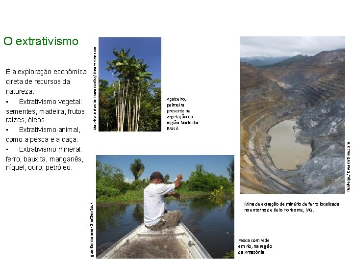 Açaizeiro, palmeira presente na vegetação da região Norte do Brasil. Helderpc/ Dreamstime. com Mauricio