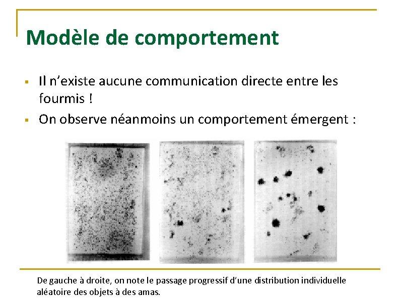 Modèle de comportement § § Il n'existe aucune communication directe entre les fourmis !