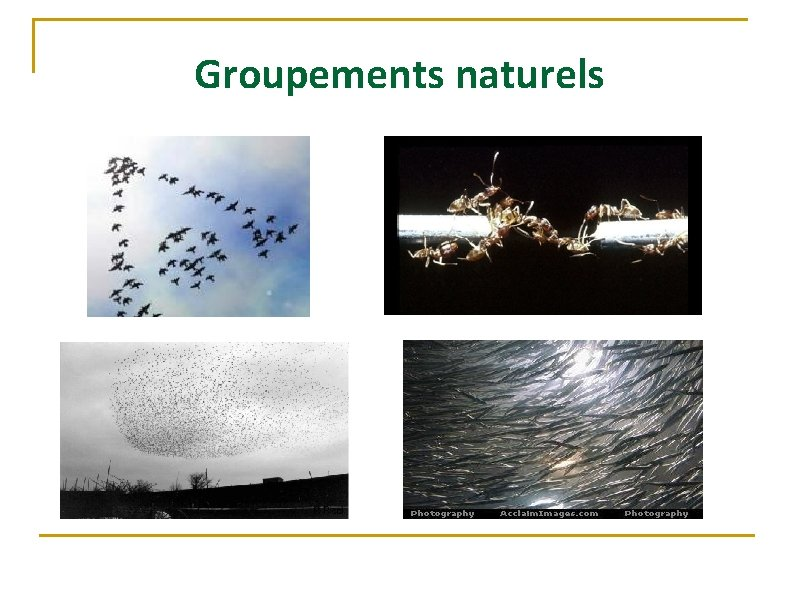 Groupements naturels