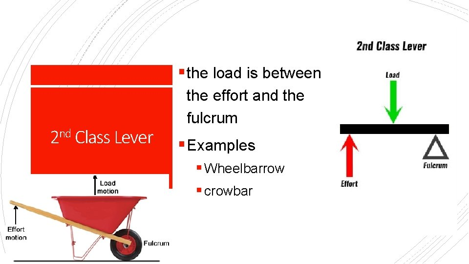 § the load is between 2 nd Class Lever the effort and the fulcrum