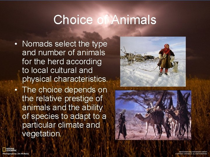 Choice of Animals • Nomads select the type and number of animals for the