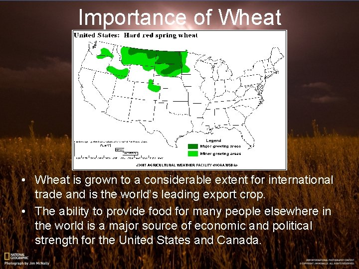 Importance of Wheat • Wheat is grown to a considerable extent for international trade